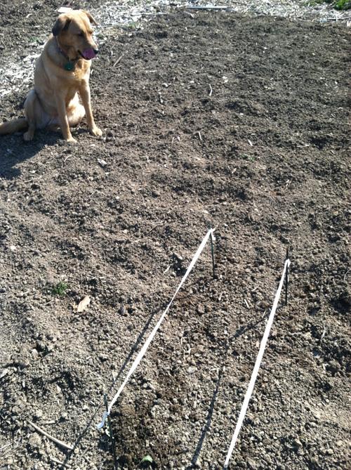 veggie lines