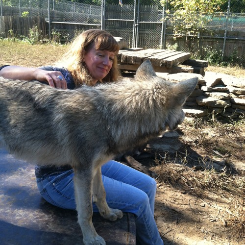 julie and the wolf