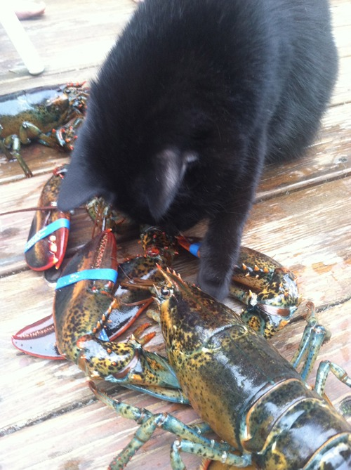 poppy gets a lobster