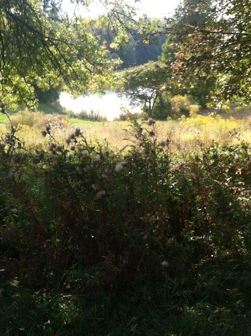 amberley green pond