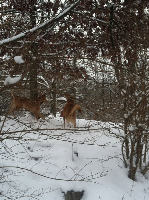 squirrel chase 2