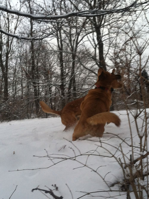 squirrel chase 3