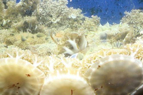 upsidedown jellies