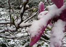 Last gasp of winter