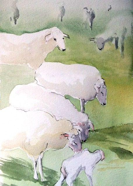 foggy sheep