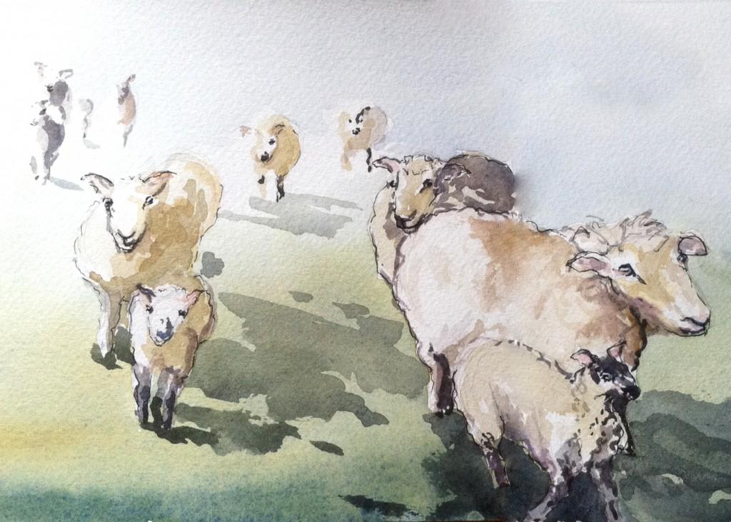 sun on foggy sheep