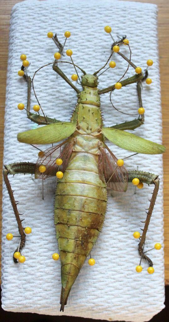 bugs 7