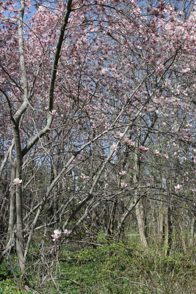 spring canopy CNC