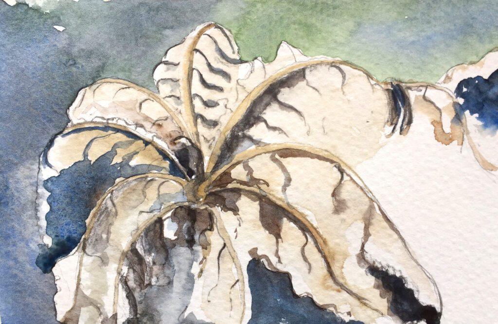 cecropia leaf sketch