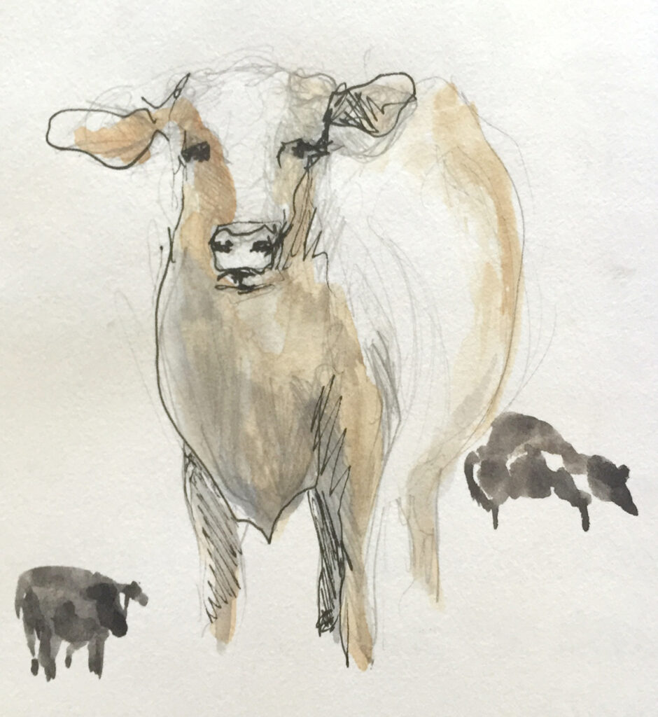 cow-sketch-1
