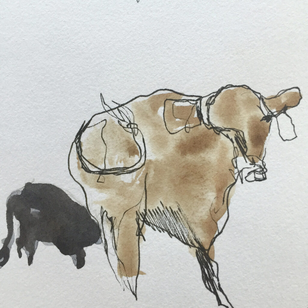 cow-sketch-2