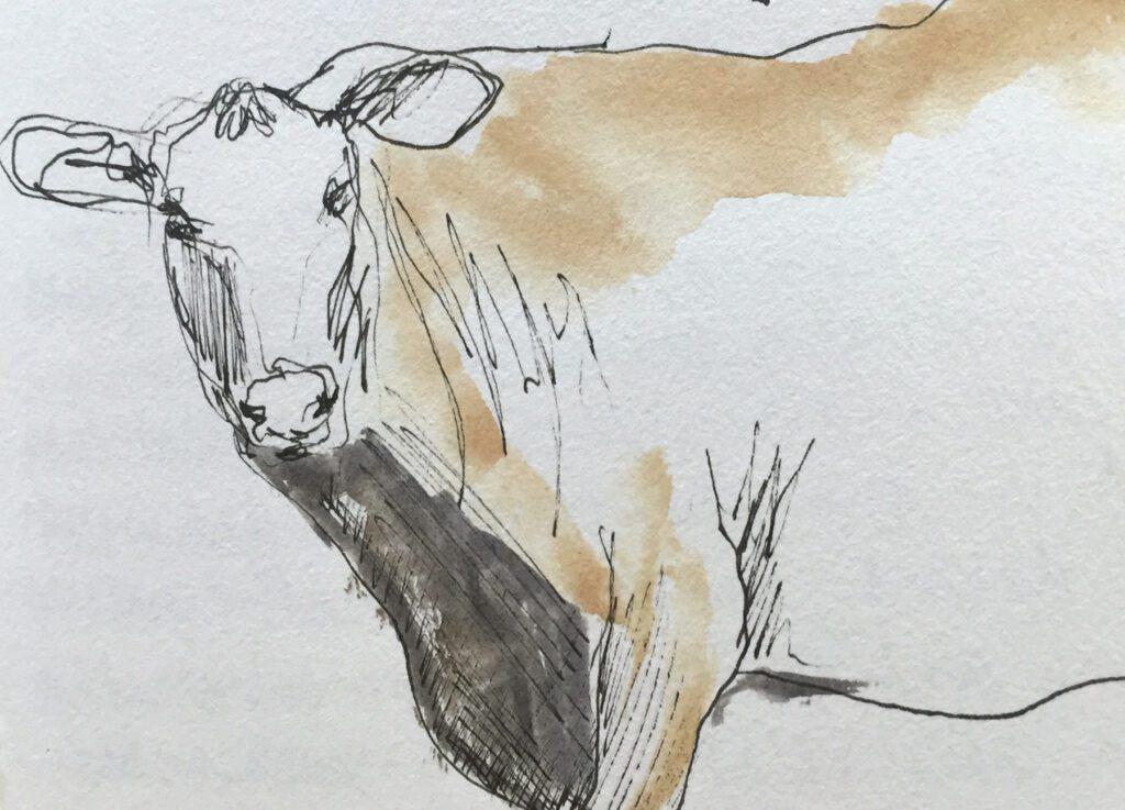 cow-sketch-3