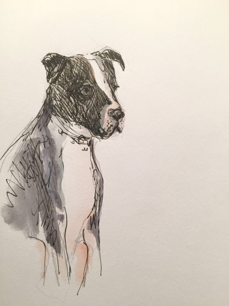 brewery-dog