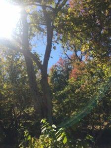 autumn-breezes-in-the-treetops