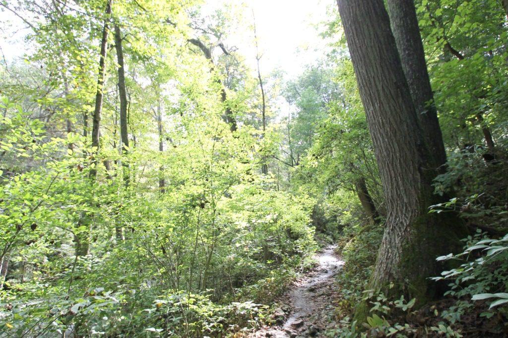 clifton-gorge-path