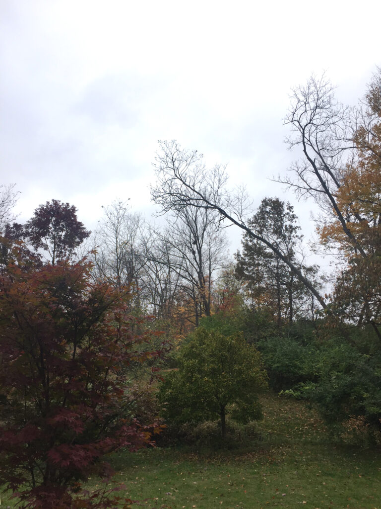 gray-day